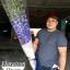 ช่อดอกไม้ Delphinium น้ำเงิน (Premium) thumbnail 1