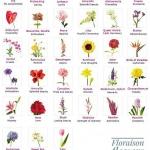 ส่งดอกไม้ สื่อความลึกซึ้งกินใจโดยไม่ต้องใช้คำพูดได้จริงหรือ
