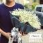ช่อดอกไม้ ยิปโซ (L) thumbnail 1