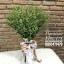 ช่อดอกไม้ วินเทจ Greenery (M) thumbnail 1
