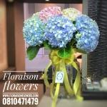 Premium pink blue Hydrangea Vase