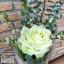 กุหลาบขาวดอกเดี่ยว by Floraison thumbnail 1