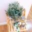 ช่อดอกไม้เอิร์ธโทน (M) thumbnail 3